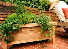 Farmer D Planter Box