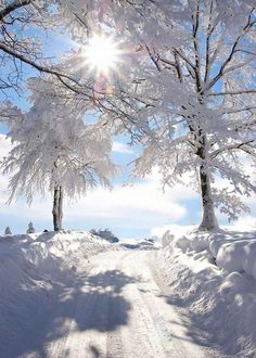 Photo: Sun shining on a beautiful winter wonderland! Winter Love, Winter Snow, Winter Christmas, Winter White, Snow White, Christmas Morning, Christmas Presents, Christmas Time, Fall Winter