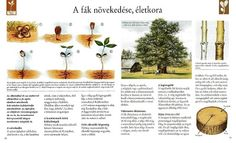 Picasa Webalbumok