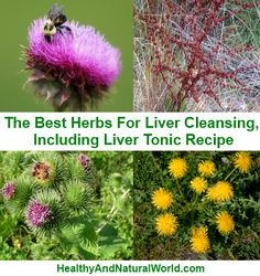 The Best Herbs For Liver Cleansing, Including Liver Tonic Recipe