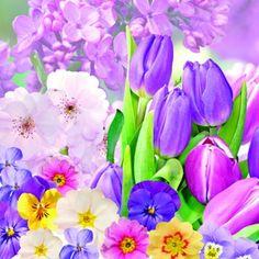 Ambiente,  Flowers - primroses,  Flowers - lilacs,  Flowers - tulips,  Spring,  lunchnapkins,  tulips,  lilac,  primroses