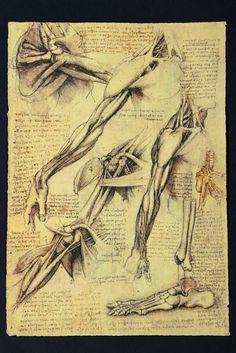 Leonardo da Vinci, Braccia