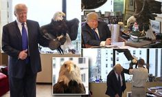 Bald Eagle Named Uncle Sam attacks Trump   http://www.boredpanda.com/bald-eagle-attacks-trump-photo-shoot-time-magazine/
