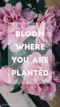 """""""Bloom where you are planted"""" pink flowers quote for wallpaper on desktop… Free Wallpaper Backgrounds, Daisy Wallpaper, Flower Phone Wallpaper, Pink Wallpaper Iphone, Wallpaper Gallery, Tumblr Wallpaper, Mobile Wallpaper, Wallpaper Quotes, Iphone Wallpapers"""