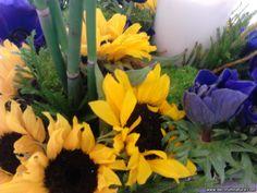 helianthus y anemonas