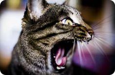 A que le teme tu gato