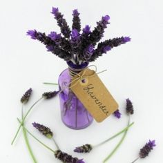 A beautiful and petite spring lavender bouquet by Kelly Dixon of Smart School House