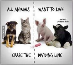 ALL animals want to live. There is no difference... a life is a life. #vegan