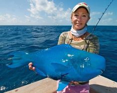 The physique of this blue parrotfish is incredible. She put in back in the ocean after pic taken.