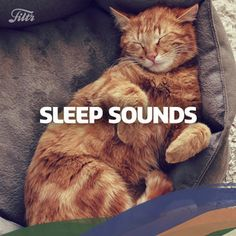 Sleep Sounds https://open.spotify.com/user/filtr/playlist/6k6C04ObdWs3RjsabtRUQa?utm_content=buffer969e5&utm_medium=social&utm_source=pinterest.com&utm_campaign=buffer #NowPlaying