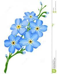 forget me not clip art vector images illustrations istock rh pinterest com forget me not clipart free forget me not clip art free