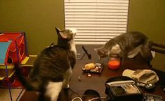 Cats love to have fun.