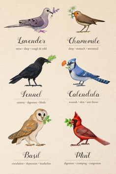"""Here is the first full set of """"Birds & Herbs"""". Prints can be purchased here. I will also be looking into creating canvas prints to sell on my Etsy page."""