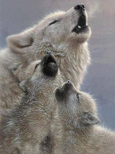 50 Parents From The Animal Kingdom And Their Adorable Kids Animals wild Beautiful Creatures, Animals Beautiful, Animals And Pets, Funny Animals, Nature Animals, Strange Animals, Animals Planet, Cute Wild Animals, Tier Wolf