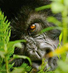 Un Mundo en Paz: En sólo 40 años desapareció la mitad de la fauna s...