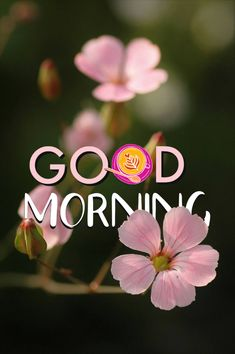 Good Morning Happy Sunday, Good Morning My Friend, Good Morning Texts, Good Morning Sunshine, Good Morning Good Night, Latest Good Morning Images, Good Morning Beautiful Images, Good Morning Picture, Morning Pictures
