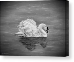 Swan Wood Print featuring the drawing Single Swan by Faye Anastasopoulou Ocean Scenes, Thing 1, Got Print, Stretched Canvas Prints, Artist At Work, Art Tutorials, Clear Acrylic, Swan, Fine Art America