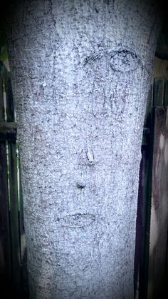 Face in a tree out the back door