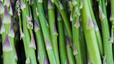How to Plant Asparagus   At Home With P. Allen Smith