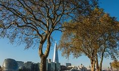 According to Kenton Rogers of Treeconomics, no more than 10% of trees on one street should be of the same species. A Treeconomics survey found that 30% of all trees in London Victoria's business improvement district were London planes, and because they are so big, they perform 60% of the ecosystem services in Victoria.