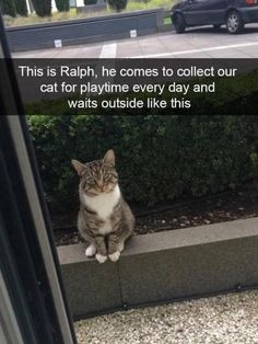 This is Ralph, he comes to collect our cat for playing every day and waits outside like this. #love #cats #animals #nature
