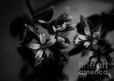 Simple Black And White by Andrea Anderegg #blackwhite #homedecor #floral #prints