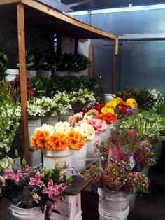 The smell of green-houses and flower shops...