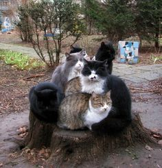 Valar meowghulis: In which seven cats all discover the same slightly elevated flat thing and claim it as their own while pretending the other six cats don't exist.