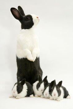 Black&White Family