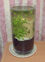 1000 images about aquarium resources on pinterest for Fish tank ice method