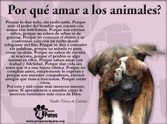 Por qué amar a los animales?