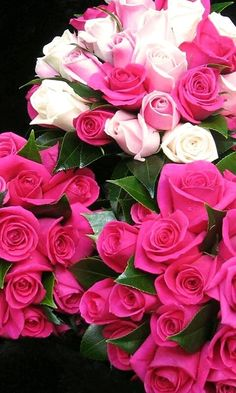 (notitle) – Adriana Lopez – Join in the world of pin Shabby Flowers, All Flowers, Pretty Flowers, Purple Flowers, Pink Roses, Beautiful Flowers Wallpapers, Beautiful Roses, Bloom, Luxury Flowers