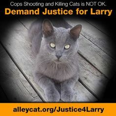 Larry was a BELOVED housecat who got lost. A sociopathic violent  police officer from Bloomfield Nebraska, trapped him and shot him, then dumped his body behind a dumpster. Please petition, write, email , and spread the word to have this officer fired. You can contact the DA office for Bloomfield Nebraska and also the Mayor and Chief of Police. JUSTICE FOR LARRY!! http://www.alleycat.org/justice4larry