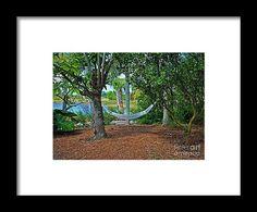 hammock, tree, pond, nature, landscape, michiale schneider photography, interior design, framed art, wall art