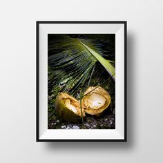 Palm & Coconut, nature photography
