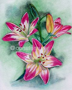 flower color pencil art | 35 Beautiful Flower Drawings and Realistic Color Pencil Drawings