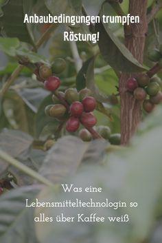 #Lilith berichtet: Was eine Lebensmitteltechnologin so alles über Kaffee weiß Foods, Round Round, World