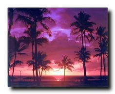 Look Wow! This stunning wall poster will bring a touch of humor into your room. This stunning poster depicts the image of cheerful purple Tropical sunset near the beach and palm trees which help to make this poster attractive and eye catchy. This poster will add beauty and bring a sense of warmth to any home. This Purple Tropical Sunset Landscape Scenery Art Print Poster will be a perfect addition for someone who is a nature lover.