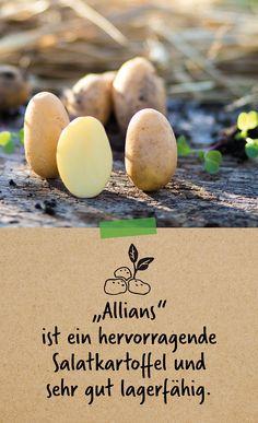 Bio Art, Breakfast, Asparagus, The Fruit, Meat, Yellow, Round Round, Plants, Morning Breakfast