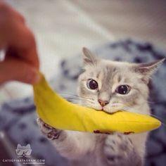 "From @emmalovesz: ""Check Emma going bananas!""..."
