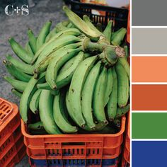 Color Palette {56}  color palettes inspired in the colors found in produce markets around the world.   www.karladiazcano.com  #color #inspiration #ideas