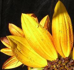 Vitality+Flower+Remedy+Spray