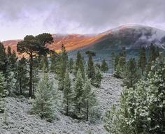 Ian Cameron  A Winter Symphony    Sugar Bowl, Cairngorm, Highlands, Scotland.