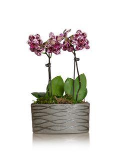 Mini Orchid - Ceramic Planter