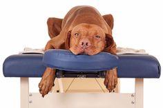 ***Masaje Terapéutico para Perros*** Las terapias naturales cada vez suman más adeptos de 4 patas, como es el caso masaje Sui Kuaii para animales, que ayuda a mejorar su calidad de vida. Descubre de qué se trata en esta nota.....SIGUE LEYENDO EN...... http://comohacerpara.com/masaje-terapeutico-para-perros_12769h.html