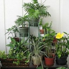indoor plant care for the winter months Indoor Plants May Need Special Care During the Winter Months - http://thegardeningcook.com/indoor-plants-winter-care/