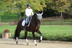 A First Look at Counter Canter. Learn the basics of this challenging test of First Level skills.