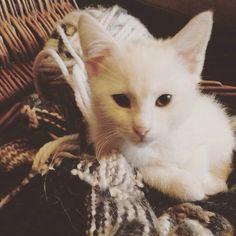BooRadley kitten