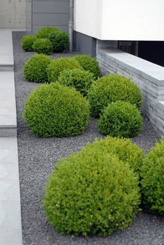 DIY landscaping ideas easy landscaping ideas for small front yard. Simple Front Yard Landscape Design. Small, low maintenance garden: Minimalist Garden.