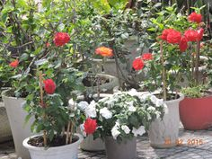 A neighbor's garden